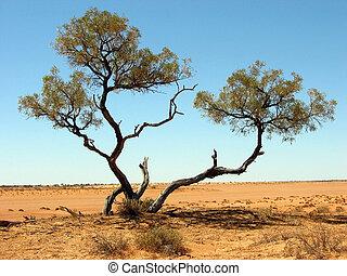 Outback Desert Tree