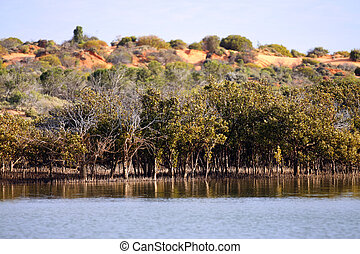 Outback Ocean Mangroves, near Redbanks at the top of Spencer...