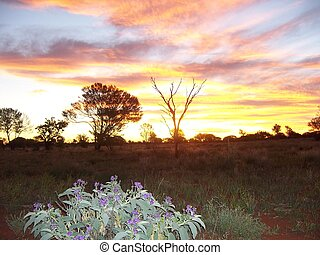 outback, solnedgang