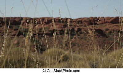 Outback tall grasses, Northern Territory - close-up span...