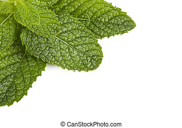 outbreaks of herbs for cooking isolated on white background,...