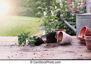Outdoor Garden Bench with Pepper Plants