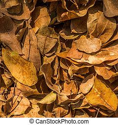 outdoor., háttér, csoport, leaves., ősz