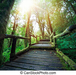 Outdoor hiking nature trail in deep green forest