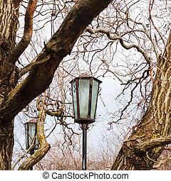 outdoor lanterns between branches in urban park