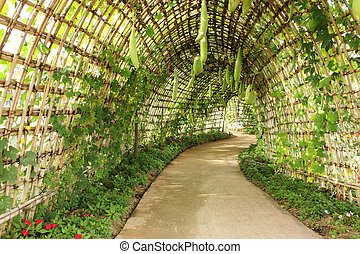 a squash Archway in the garden