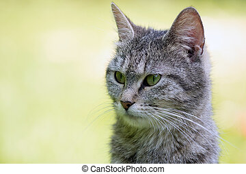 Outdoor portrait of cat