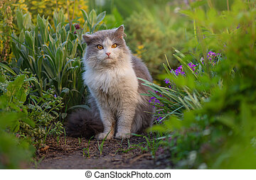 Outdoor portrait of cat playing with flowers in a garden. Lives in harmony with nature