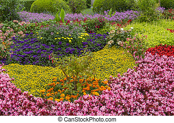 lots of colorful flowers