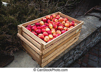 Outdoor shot of wooden box full of red apples - Outdoor shot...