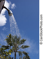 Outdoor shower with palm tree in background
