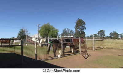 Outdoor stable in Australia - A steady wide shot of a stable...