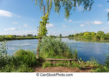Outdoor wooden bench on shore of pond against reeds thicket