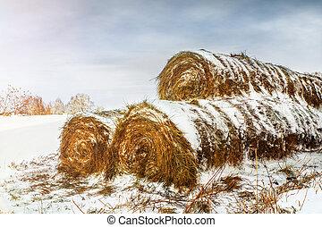outdoors., seco, alimentación, nieve cubrió, animales, almiares