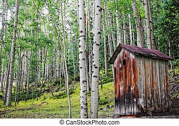 outhouse, vieux, forêt aspen