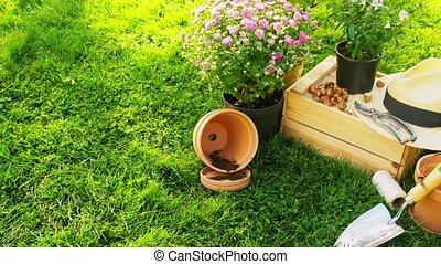 outils, bois, fleurs, été, jardin, boîte