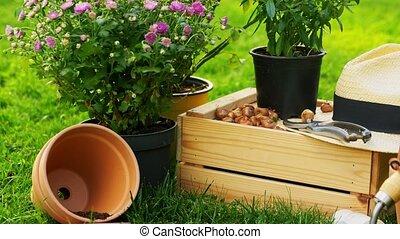 outils, jardin, fleurs, bois, été, boîte
