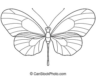 Outline Butterfly - The transparent outlinear skeleton of...