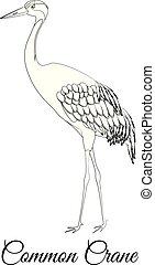 outline., colorido, vector, común, pájaro de la grúa