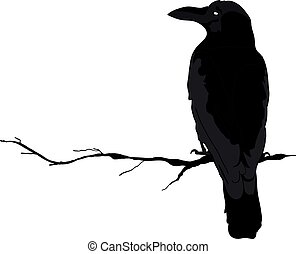 outline., diferente, silueta, cuervos, vector, positions.