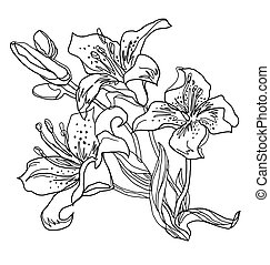 Outline Lily flowers isolated on white. Vector freehand fast sketch.