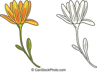 Outlined and yellow flower isolated on white. Vector...