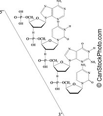 Outlined Deoxyribonucleic acid from