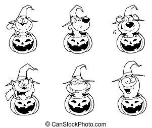 Outlines Of Animals In Halloween Pumpkins
