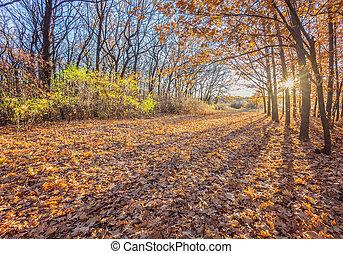 outonal, park., árvores outono, e, folhas