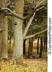 outono, árvore carvalho, parque