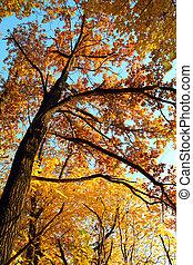 outono, árvore, em, pôr do sol, luz