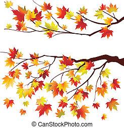 outono, árvore maple, ramos