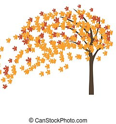 outono, árvore, vento, maple