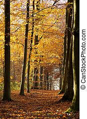 outono, 01, -, floresta