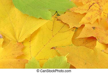 outono, abstratos, folhas, fundo