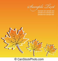 outono, abstratos, maple, fundo