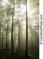outono, alvorada, floresta