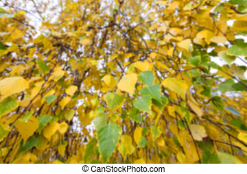 outono, antigas, foliage