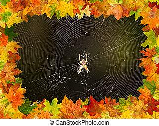 outono, aranha