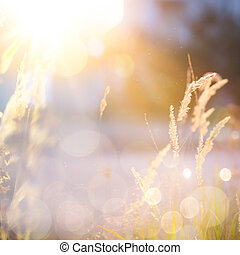 outono, arte, ensolarado, fundo, natureza