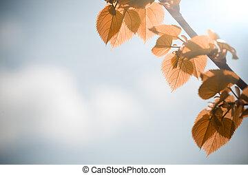 outono, azul sai, céu, contra