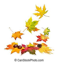 outono, baixo, folhas, queda, coloridos