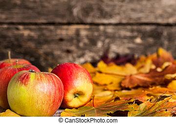 outono, borda, de, maçãs, e, maple sai
