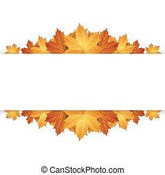 outono, borda, maples, leaves.