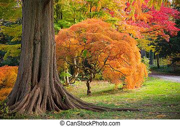 outono, caminho