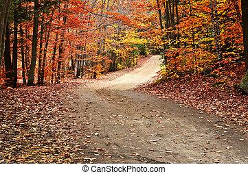 outono, caminho, paisagem