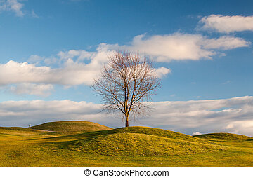 outono, campo golfe