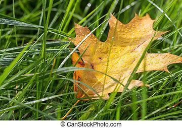 outono, capim, folha