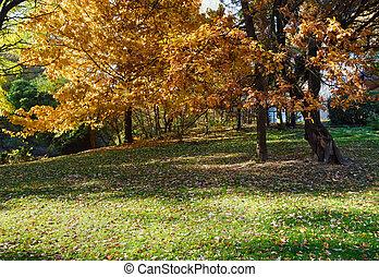 outono, carvalho, park., árvore