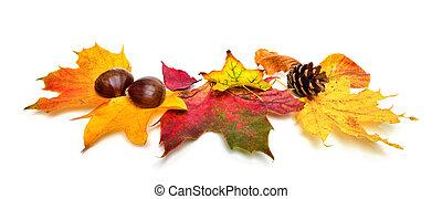 outono, castanhas, branca, folhas